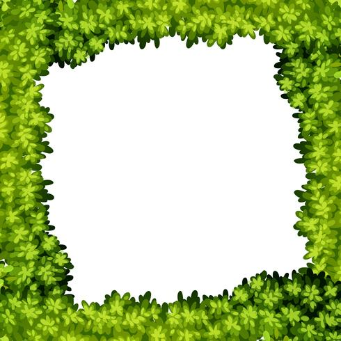 Un cadre de feuille verte