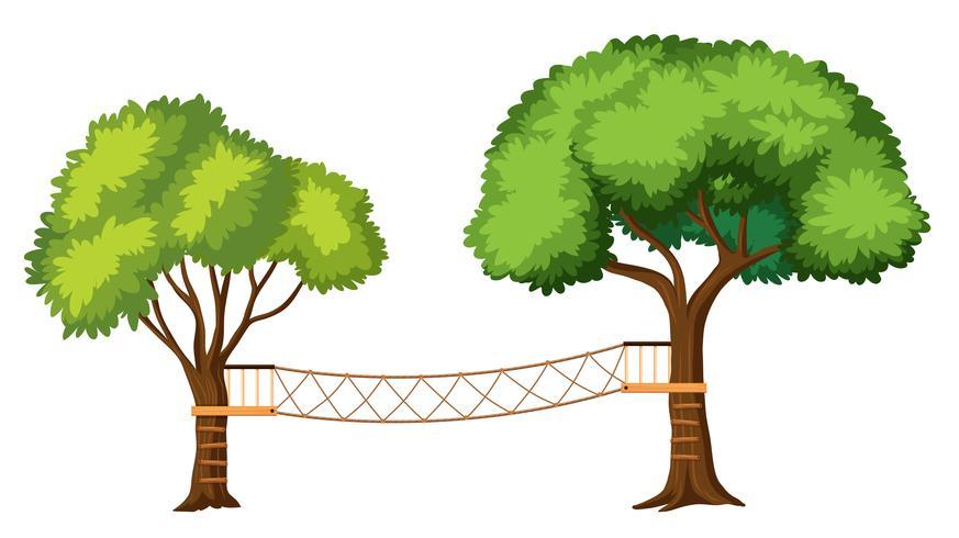 Árbol aislado de actividades de aventura.