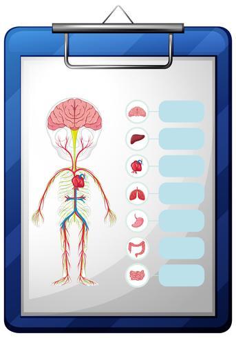 Órgãos humanos, ligado, azul, tábua