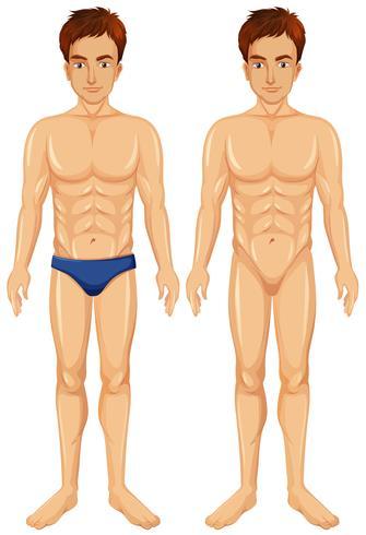 Um vetor de corpo masculino