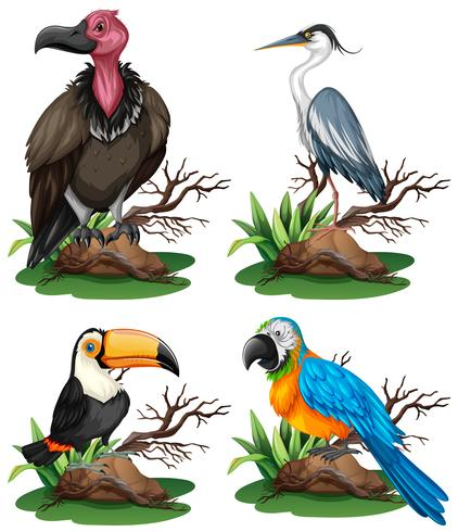 Quatre espèces d'oiseaux sauvages