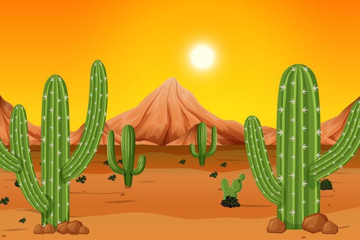Een hete woestijnachtergrond