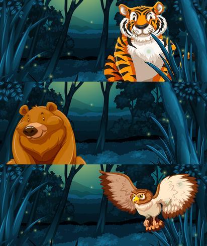 Animales salvajes en el bosque por la noche.