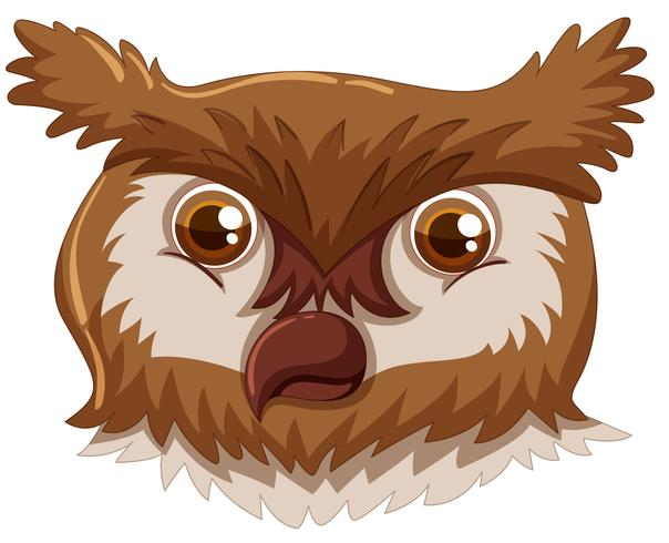 An owl face on white background