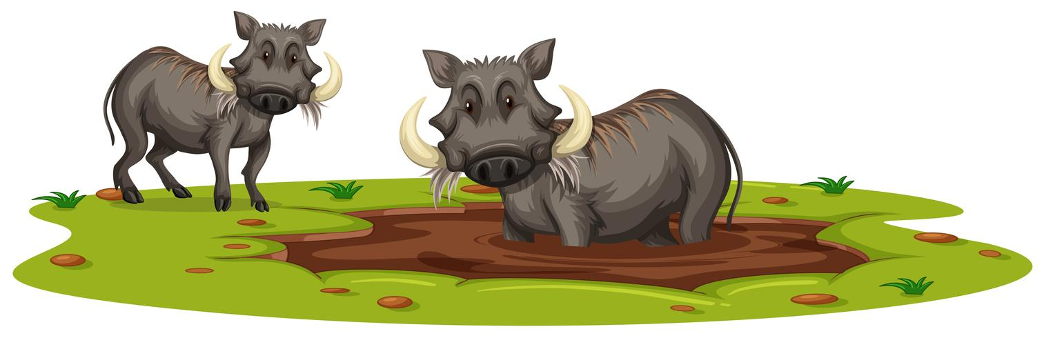 Two Boars Playing in Mud