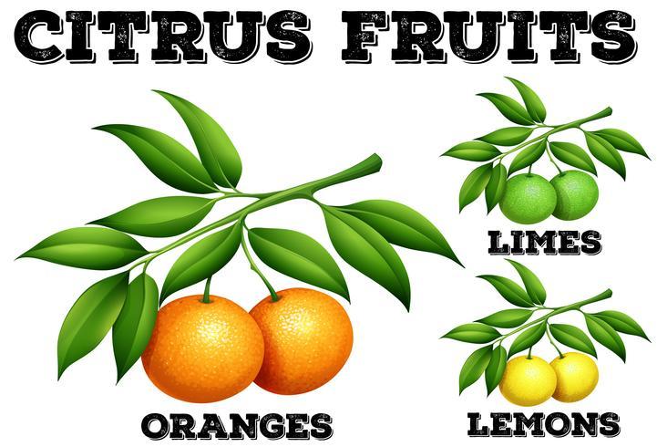 Frutas cítricas em ramos