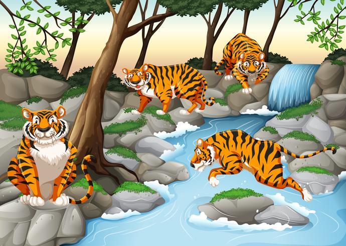 Four tigers living by the river - Download Free Vector Art, Stock Graphics & Images