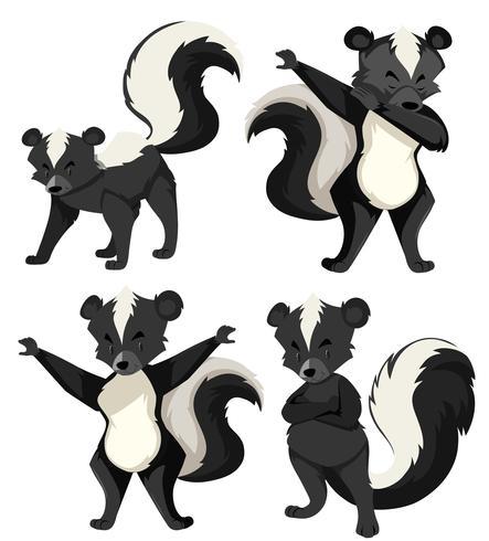 A set of skunk