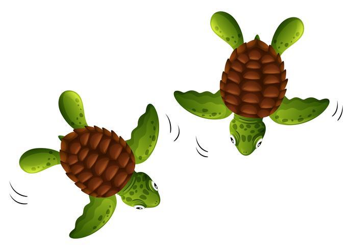 Weißhintergrund mit zwei Babyschildkröten