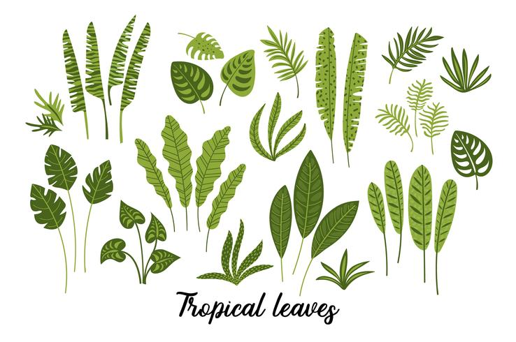 Vector set of abstract tropical leaves.