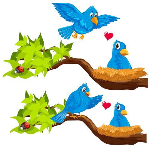 Pássaros azuis no ninho