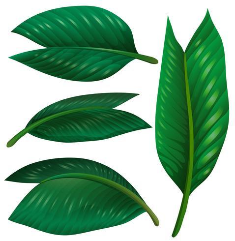 Set grüne Blätter auf weißem Hintergrund