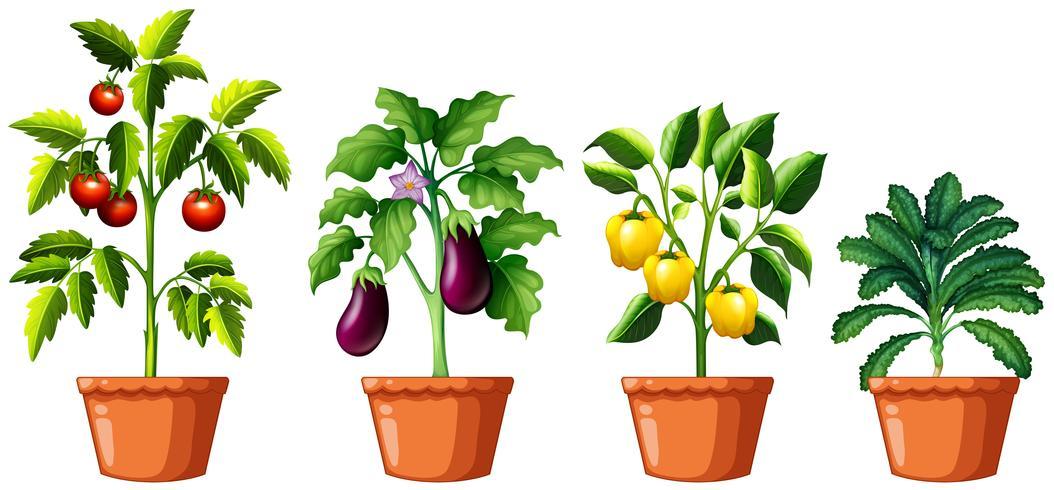 Set of different plants - Download Free Vectors, Clipart Graphics & Vector Art