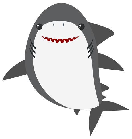 Grande tubarão branco em fundo branco