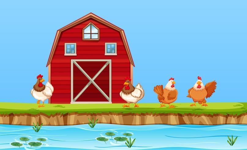 Chickens on farm scene