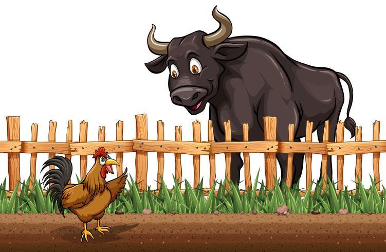 Búfalo y pollo en la granja