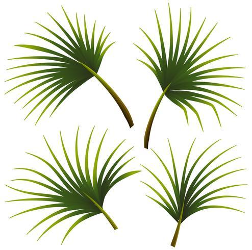 Conjunto de hojas de palma