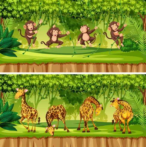 Set wilde Tierlandschaft