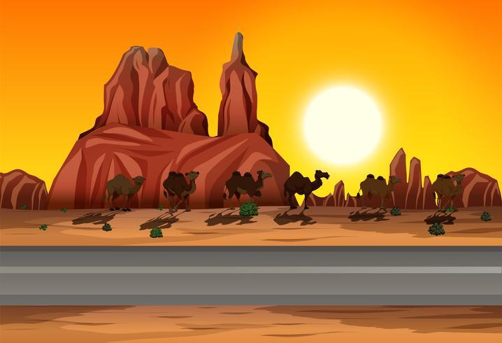 Desert sunset road scene