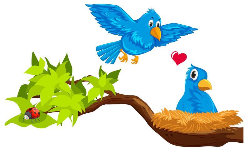 Bird couple in nest