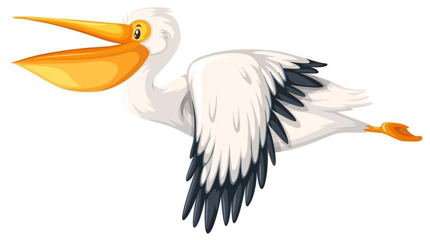 Un pelícano volando sobre fondo blanco