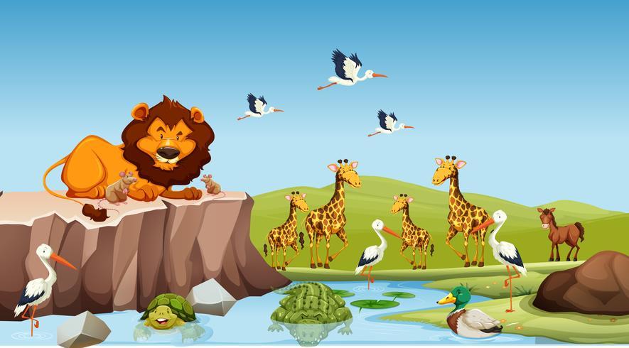 Animales salvajes que viven junto al estanque.