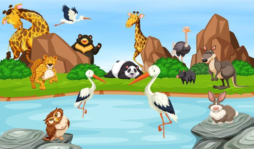 Muchos animales salvajes junto al estanque. vector
