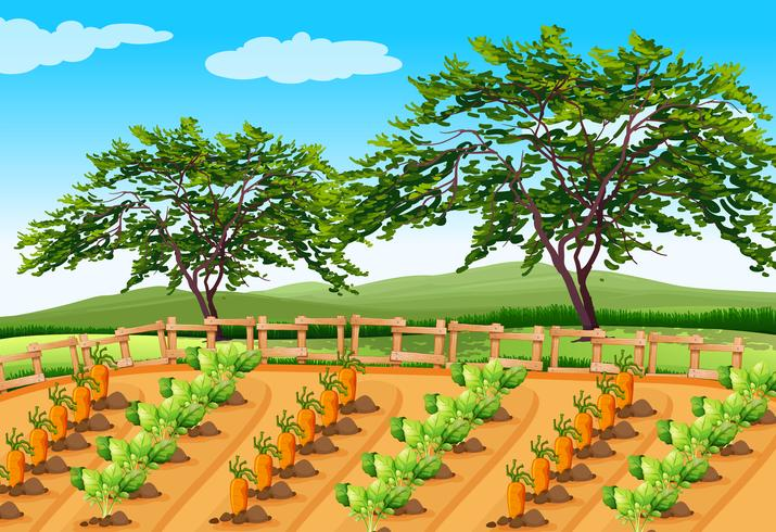 Vegetable Farming in the Rural Area