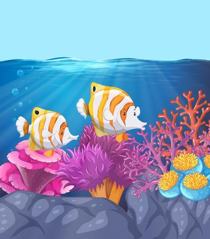 Twee prachtige vissen onder water