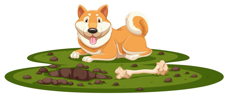 Een Shiba-hond op witte achtergrond