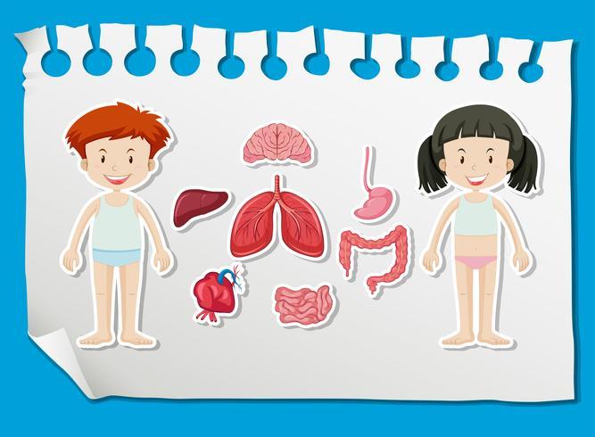 Garçon et fille avec différents organes sur le graphique