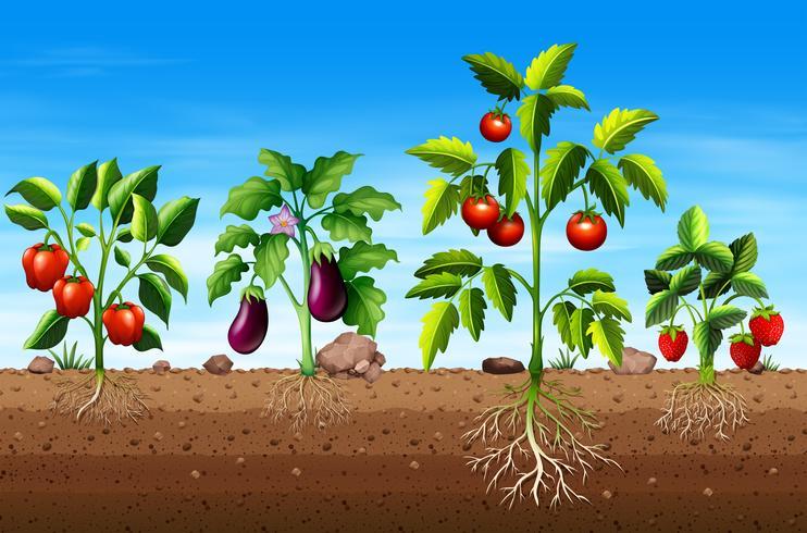 Conjunto de diferentes plantas vegetales y frutales.