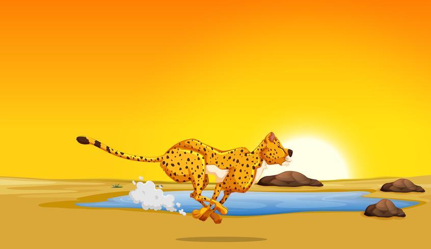 Un ghepardo che corre nel deserto
