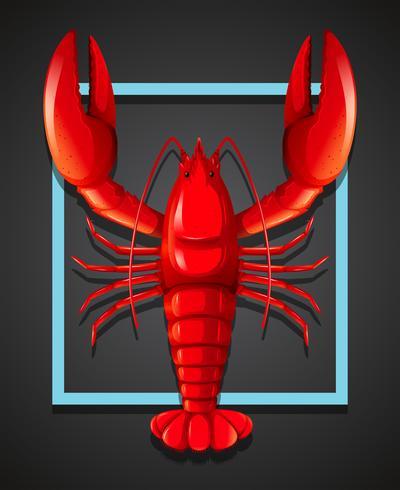 Uma lagosta vermelha no modelo preto