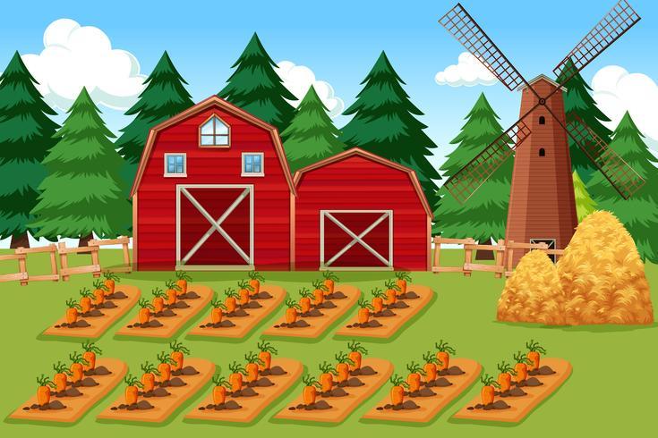 gårdsplats med morötter