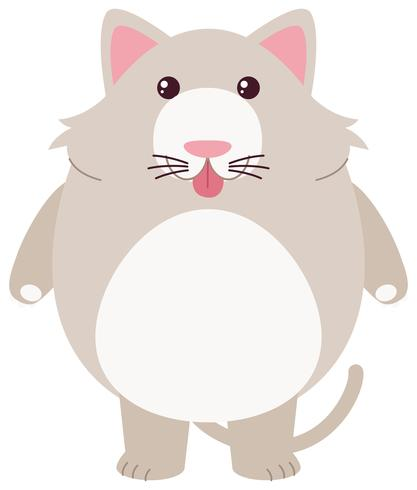 Gato cinzento com cara de bobo
