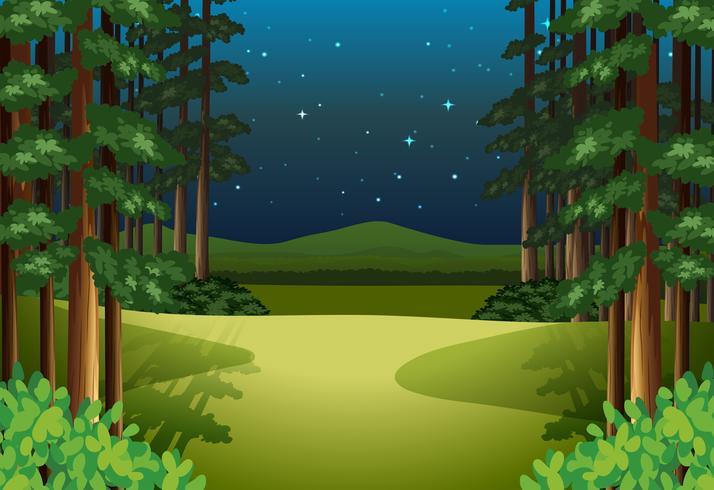 Un paisaje de bosque por la noche.