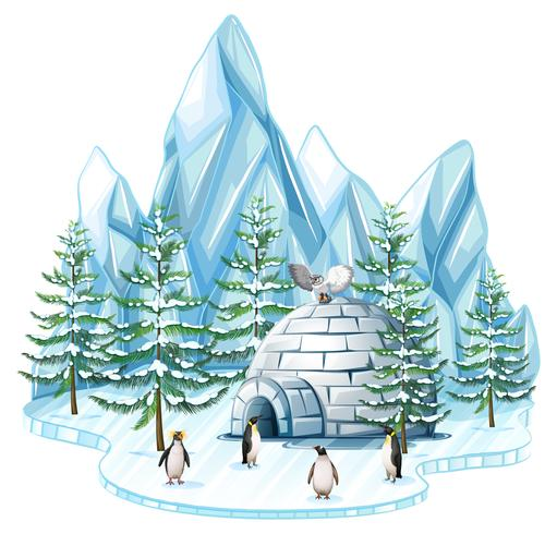 Pingviner och uggla av igloo