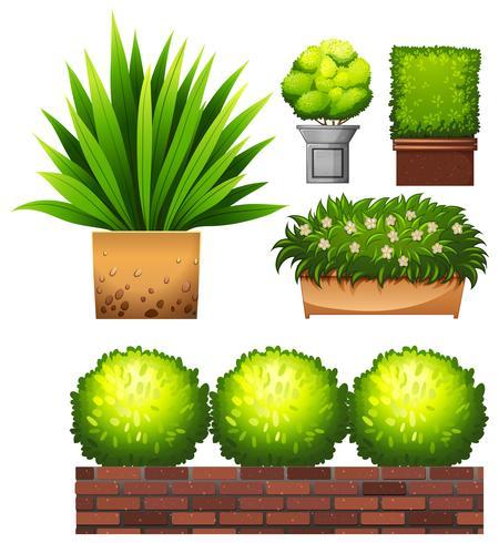 Set di piante su sfondo bianco