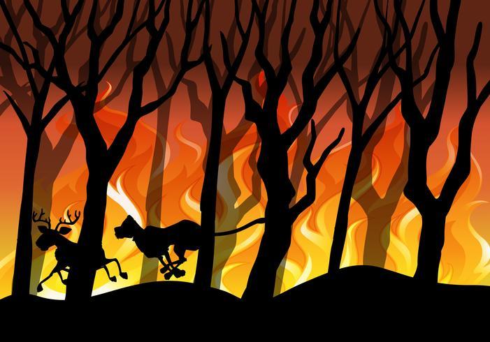 Silueta, wildfire, floresta, fundo