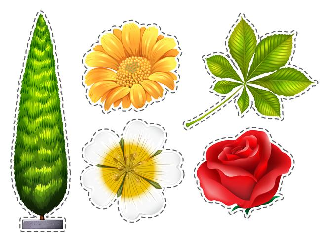 Diferentes tipos de flores vetor