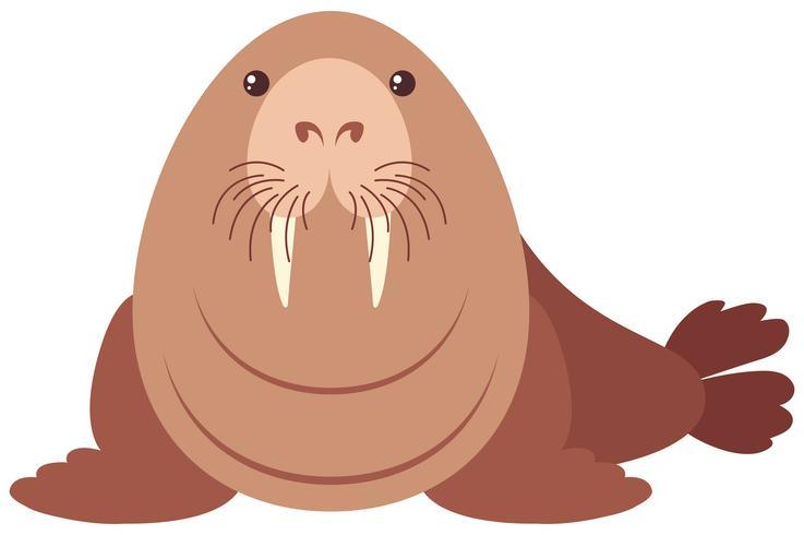 Walrus med gott ansikte vektor