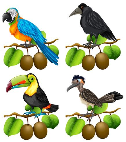 Diferentes tipos de aves en la rama de kiwi. vector