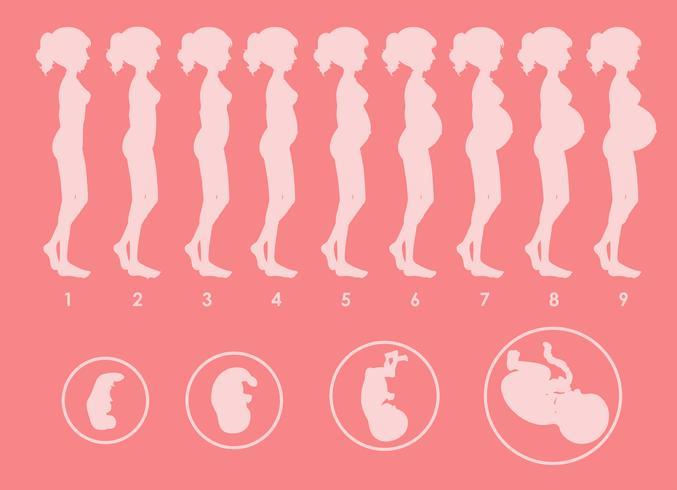 Een vector van zwangere progressie