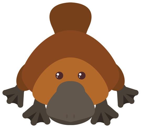 Platypus su sfondo bianco vettore
