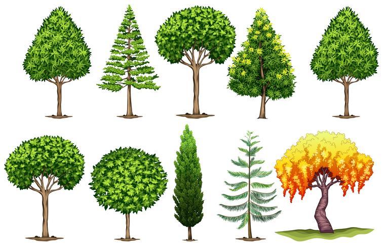 Set verschiedene Arten von Bäumen