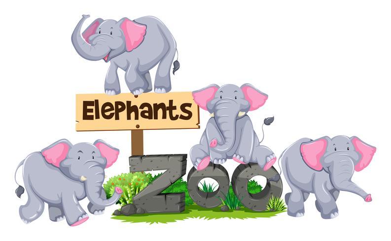 Elefantes alrededor del cartel zoológico