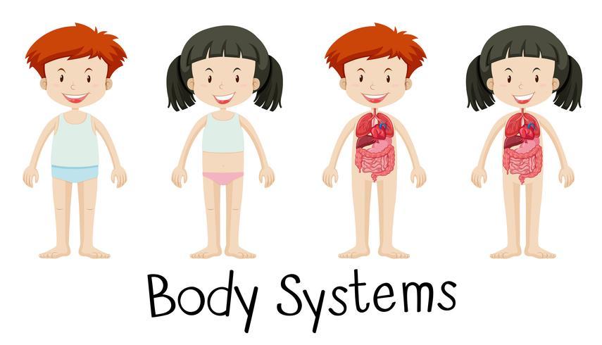 Kinderen en lichaamssystemen
