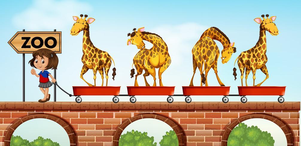 Niña tirando carros con jirafa al zoológico vector