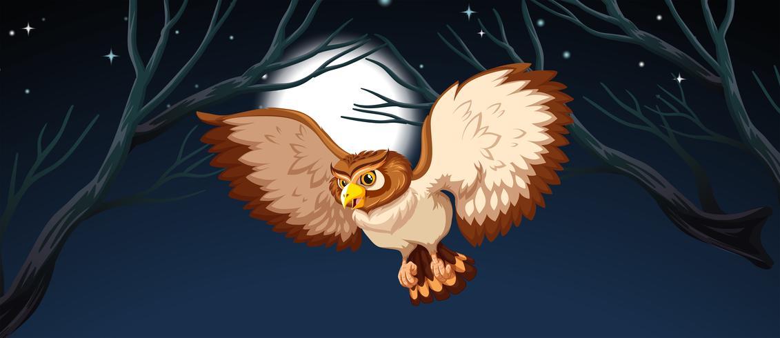 Um, coruja, caça, à noite